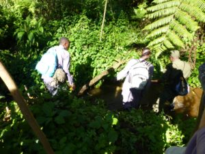 gorilla-trekking-ranger-fluss-uganda-ugandaleaks