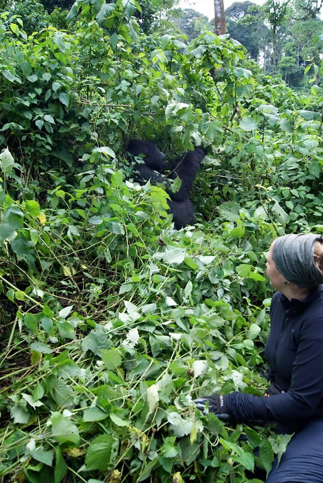 uta-broemelmeyer-gorilla-silberruecken-trekking-uganda-ugandaleaks
